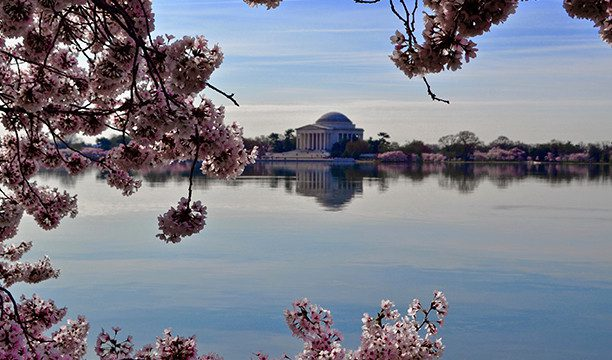 karryon-washington-dc-cherry-blossom-season